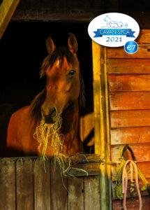 Cavan SPCA Calendar